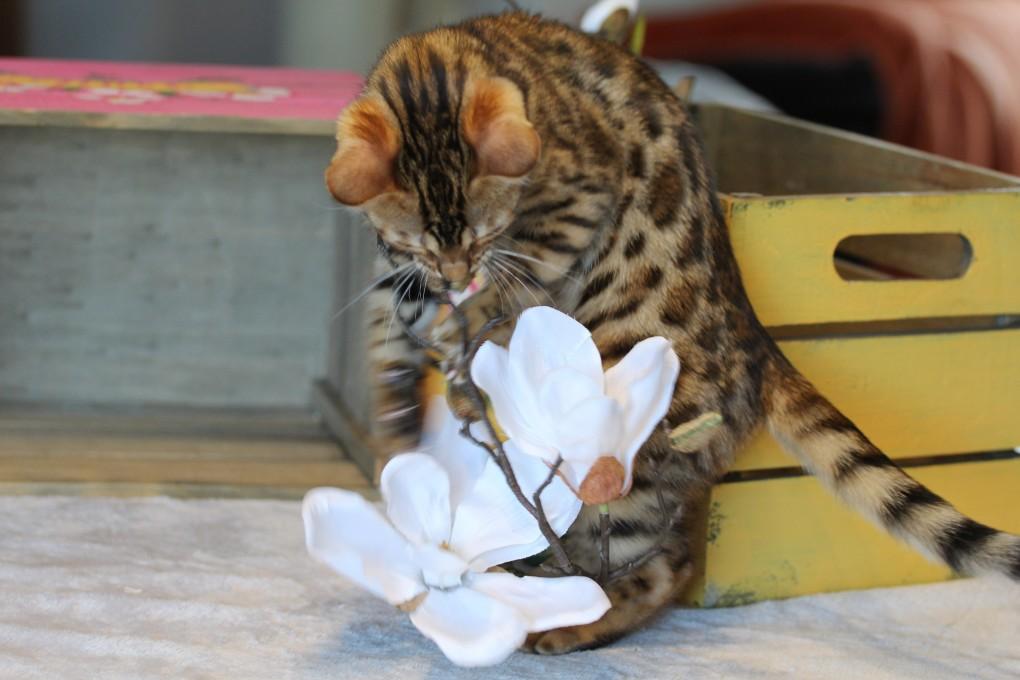 Phoebe (ich mag die Blume, riecht super!)