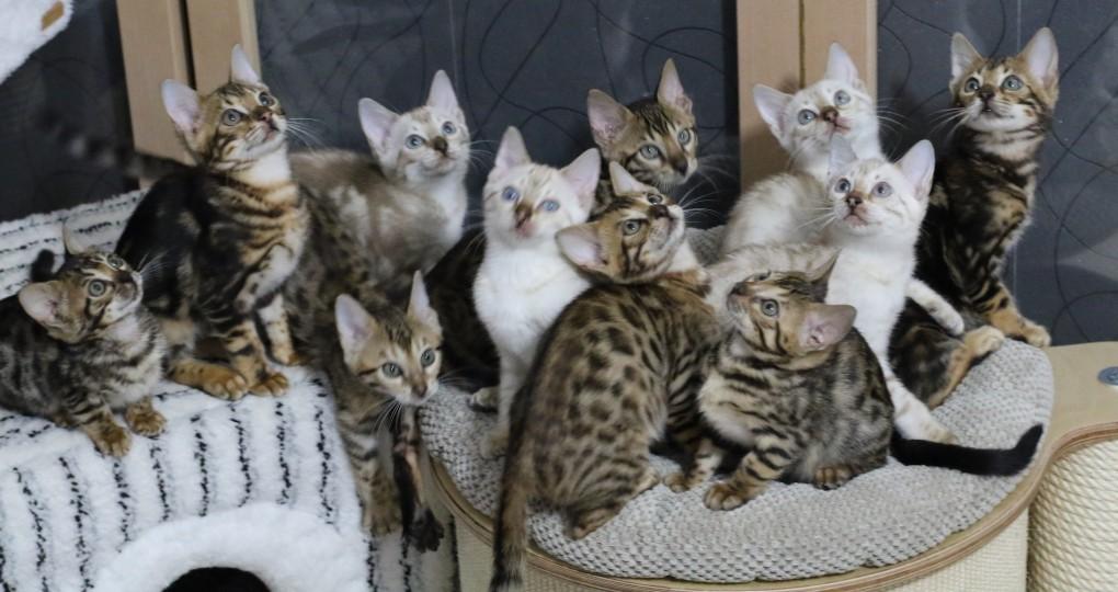 Alle 11 Kitten in einem Bild (2 Würfe)