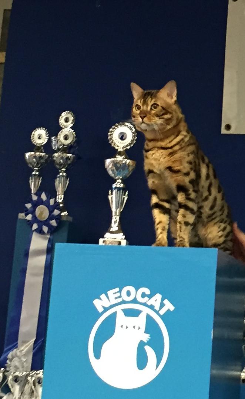 John Wayne auf der Neocat 2016 1. Platz in der Ehrenklasse sry, Handyphoto